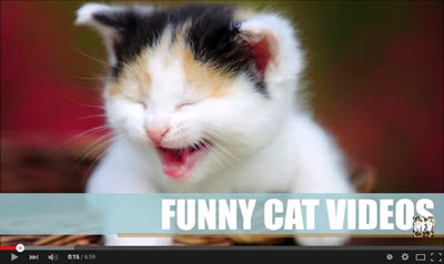 image for Why cat videos are good for you